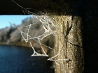 Spiders web frozen in time after a -19 frost Corner piece with river in background